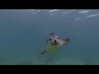 Дайвинг с Гончими океана ...