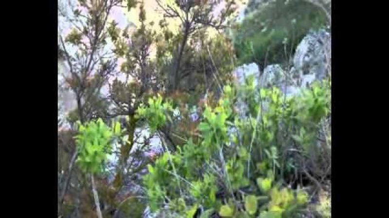 Джангуль на Тарханкуте Крым 1мая 2012г