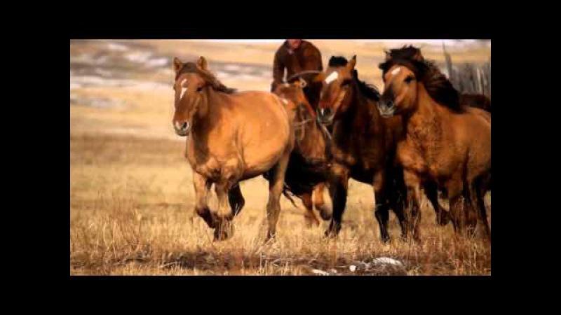 Монгол бахархал : Адуучин