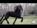 Клип про лошадей с: