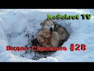 Видео - Спасение 28. Спасаем собак от холодной смерти. Город Улан-Удэ. » Freewka.com - Смотреть онлайн в хорощем качестве