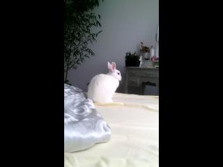 Пушистая статуэтка крольки.))