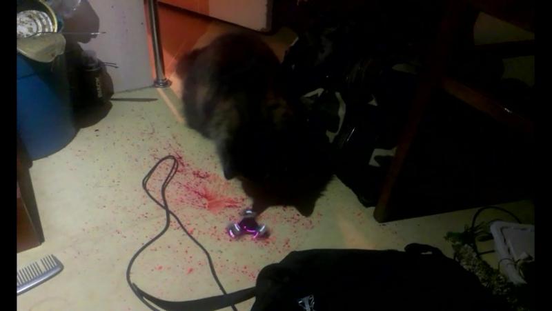 Мой кот даун