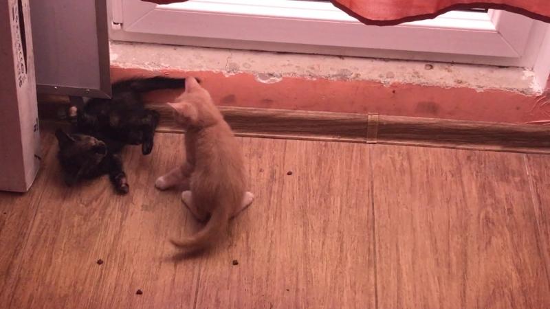 Рыжий котенок веселится))