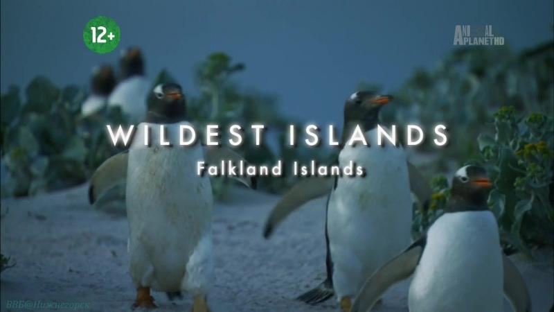 «Неизведанные острова (10). Фолкленды. Пингвиний рай» (Документальный, животные, 2013)