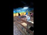 зоопарк моремолл