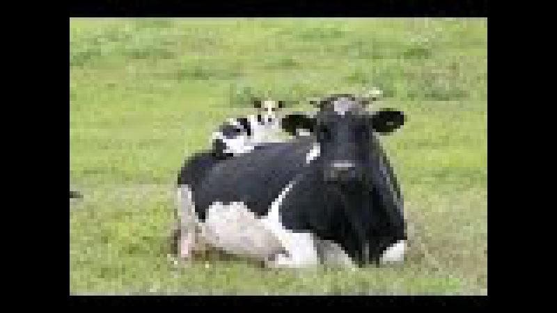 Mleko i produkty mleczne. Czy picie mleka UHT jest zdrowe? Prawda o mleku | Film lektor pl