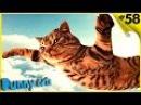 ЛУЧШИЕ ПРИКОЛЫ с котами Самые смешные видео про котов и кошек