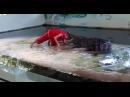 Крокодил прокусил голову дрессировщику в Таиланде видео