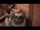 Трюк с котом. Не повторяйте это дома