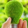Зеленый офис, квартира, участок. Экология мысли.