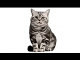 Песня котов и котят √3.Ты мой миленький хорошенький мой котик.