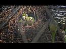 La Ménagerie, le zoo du Jardin des Plantes - vidéo Dailymotion