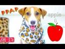 PPAP - Pen Pineapple Apple Pen | СОБАКА ДЖИНА ПОЁТ - Pen-pineapple-apple-pen | Elli Di Pets