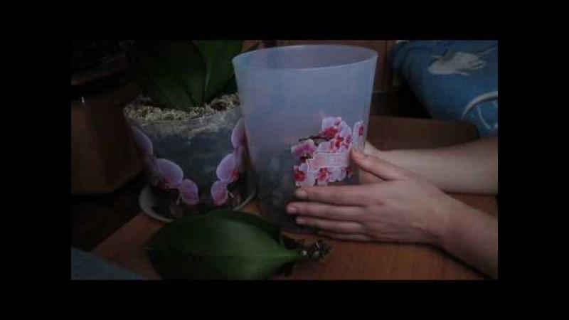 Две непростительные ошибки при посадке орхидеи в закрытую систему.