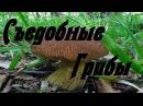 Съедобные грибы.1-ой и 2-ой категории.
