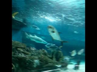 акула... офигеть! офигеть! офигеть!