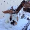 Кролиководство в Казахстане