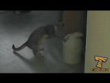 чем занимается твой кот дома пока тебя нет дома?