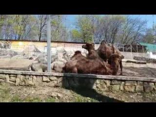 ✔ ВЛОГ Идём в Кишинёвский Зоопарк Много разных животных Прыгаем на батуте Melissa Tv...