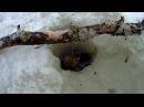 Зимняя рыбалка онлайн и таймлапс видео в Карелии 2016 конец января