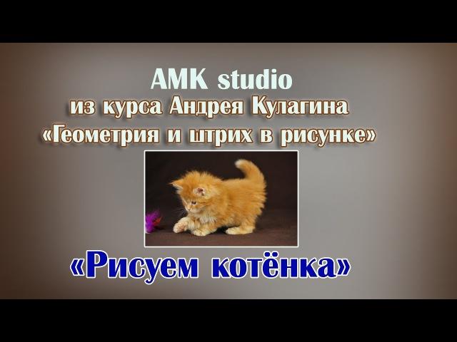 Рисуем котенка - Геометрия и штрих в рисунке,Андрей Кулагин, AMK studio