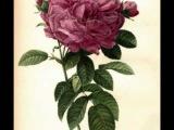 Mignonne, Allons voir si la rose, Voix de ville