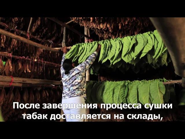 История табака от La Aurora Cigars с русскими субтитрами