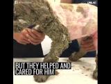 Спасение пса. Больше видео в группе Dingo