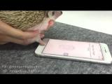 Ежик разблокирует айфон