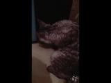Мой кот ваня
