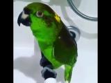 Птица счастья завтрашнего дня (VHS Video)