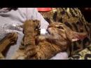 Валерьянка и кот =