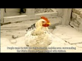 Char Horaz/The Speckled Rooster  Uyghur Movie English Subtitle by Kurban Niyaz
