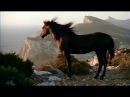 Казачья песня Конь ( На рассвете ) Дмитрия Шведа и Ларисы Черниковой