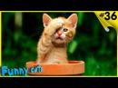 Приколы с котами и кошками Смешные животные Смешные коты