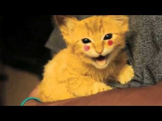 Котёнок Пикачу ахахха наркоманский няшный брееед