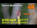 КЛЕЩИ Надежная ХИМИЧЕСКАЯ и механическая ЗАЩИТА от клещей Братья Щербаковы 4К