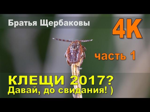КЛЕЩИ 2017 Давай до свидания Часть 1 братья Щербаковы 4К Защита от укусов клещей
