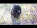 Кити 6,5 месяцев Persimoone Hakuna Matata + Joy Qween Kimberly