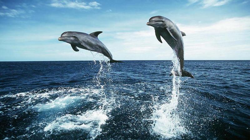 Физминутка. Морские акробаты.