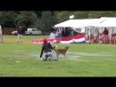 USDDN European Dogfrisbee Championship.