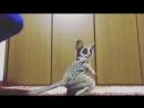 Забавный зверек.малыш лемур играет с мячиком