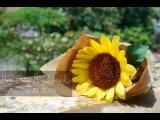 Sunflower Paper Flower tutorial- Hoa h