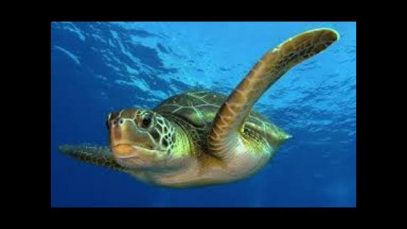 Тайны океана. Подводный мир. Документальный фильм National Geographic.