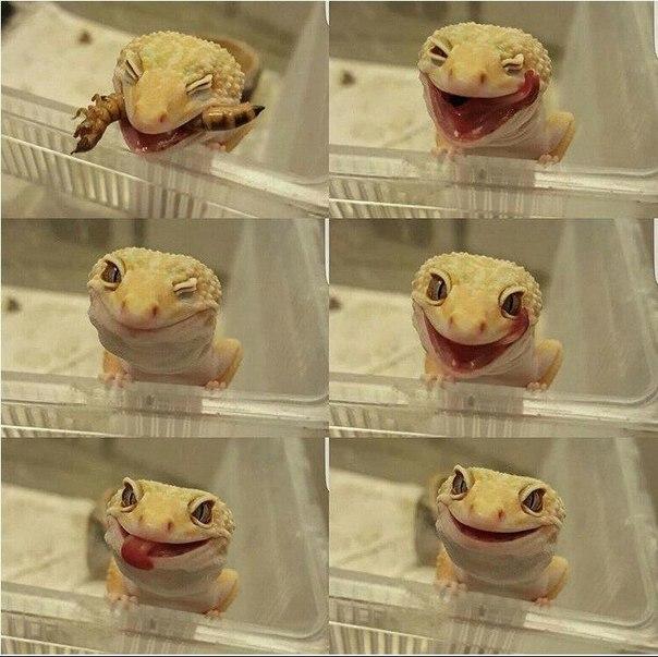 #fansofreptiles #рептилии #игуаны #террариум #ящерицы  улыбайтесь чаще!