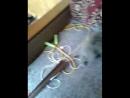играю с кошками