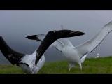 Жак Перрен - Птицы ( Le peuple migrateur )
