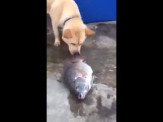 Собака пытается спасти рыб, показывая человеку, что им нужна вода.