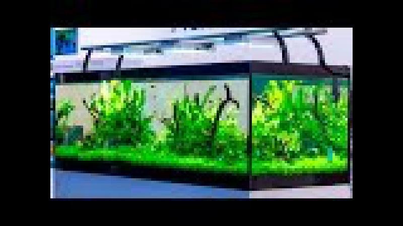 180cm planted aquarium of Aquaflora Ruinemans - Interzoo 2016